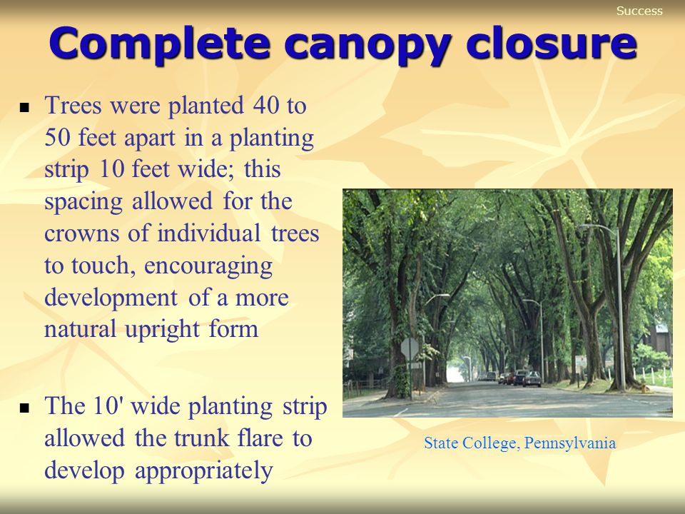 Complete canopy closure