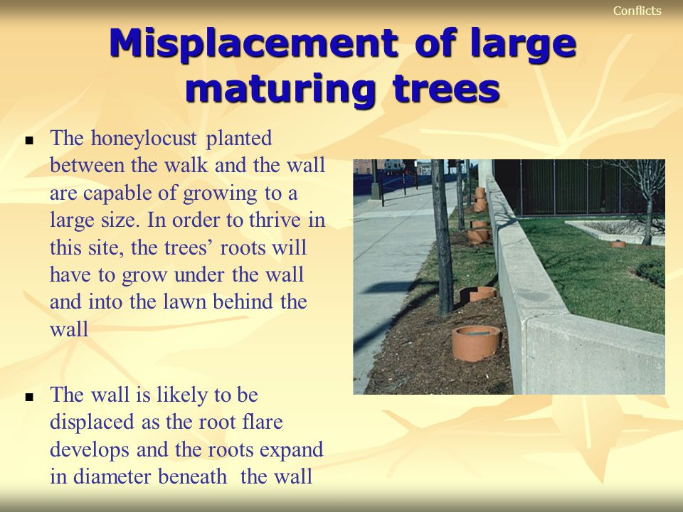 Misplacement of large maturing trees
