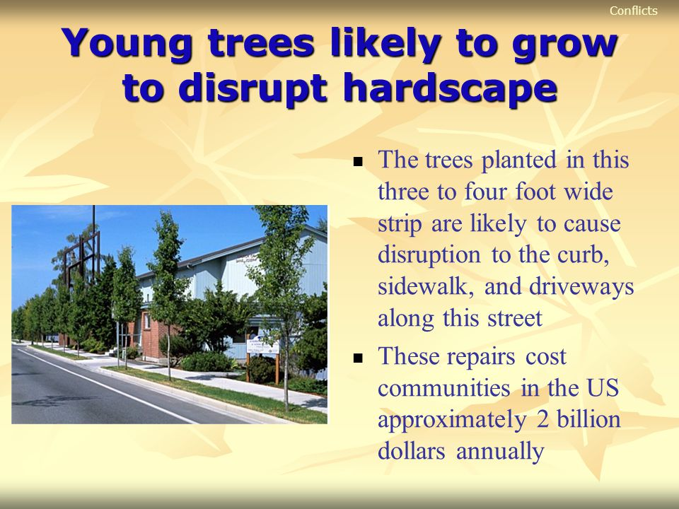 Young trees likely to grow to disrupt hardscape