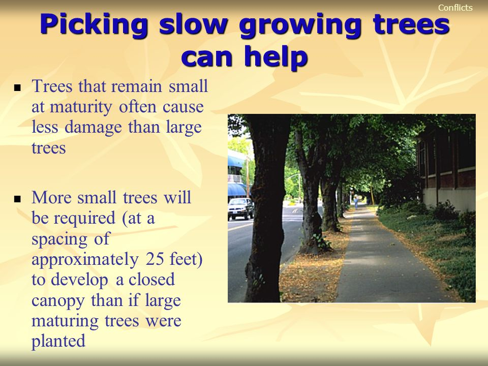 Picking slow growing trees can help