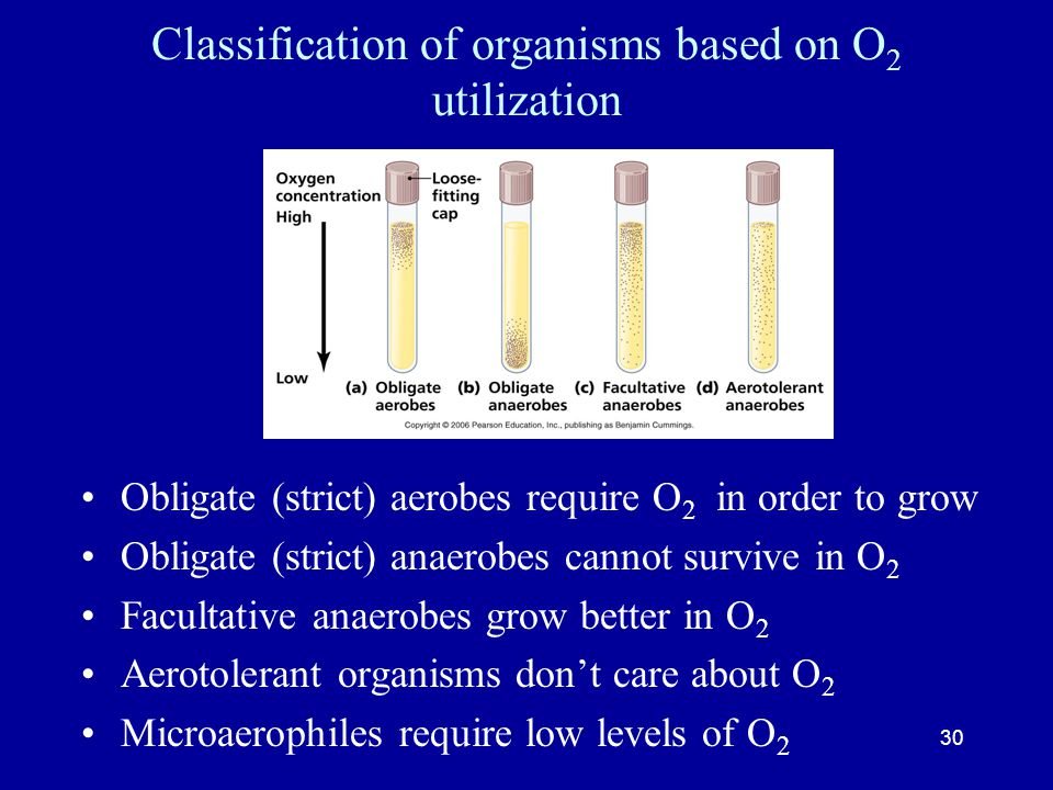 Classification of organisms based on O2 utilization