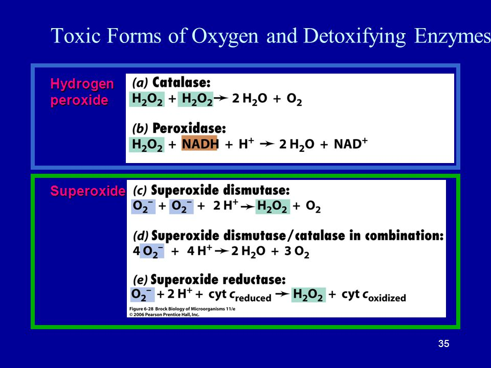 Toxic Forms of Oxygen and Detoxifying Enzymes