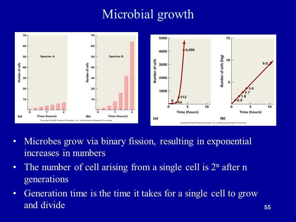 Microbial growth Microbes grow via binary fission, resulting in exponential increases in numbers.