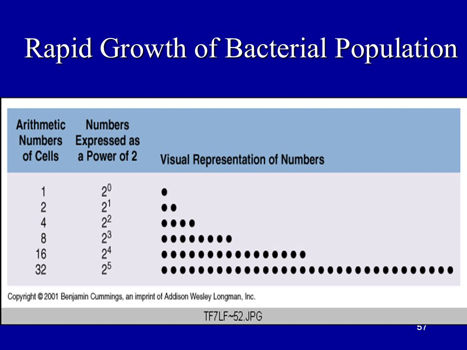 Rapid Growth of Bacterial Population