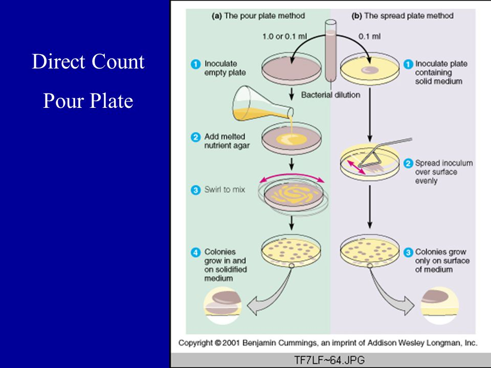 Direct Count Pour Plate