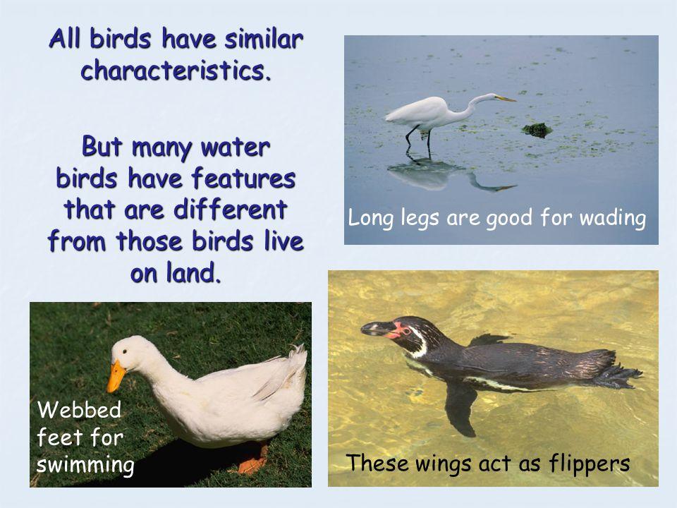 All birds have similar characteristics.