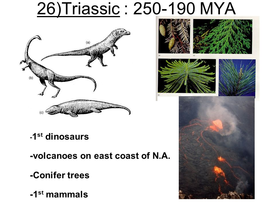 26)Triassic : 250-190 MYA -volcanoes on east coast of N.A.