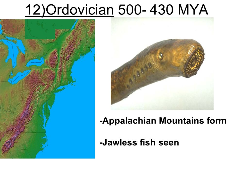 12)Ordovician 500- 430 MYA -Appalachian Mountains form
