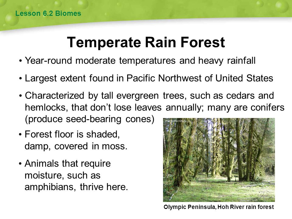 Lesson 6.2 Biomes Temperate Rain Forest. Year-round moderate temperatures and heavy rainfall.