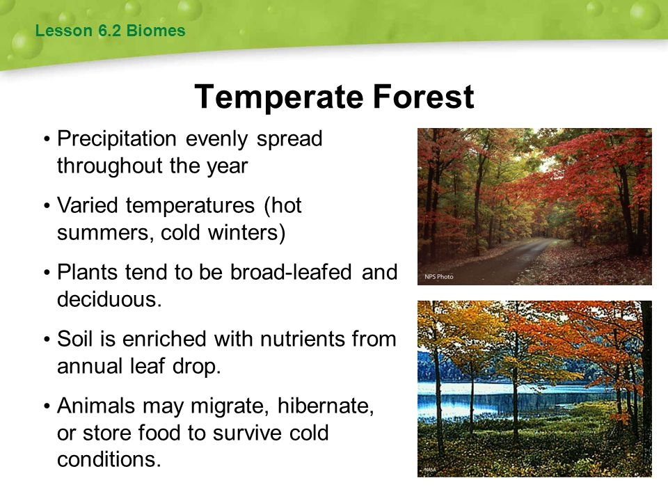 Temperate Forest Precipitation evenly spread throughout the year