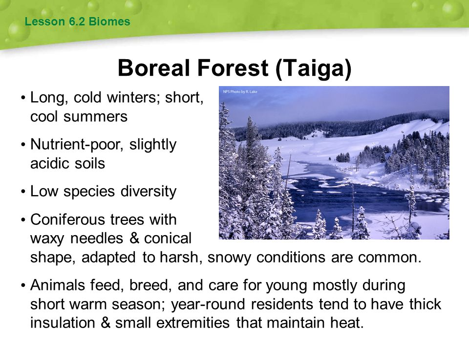 Boreal Forest (Taiga) Long, cold winters; short, cool summers