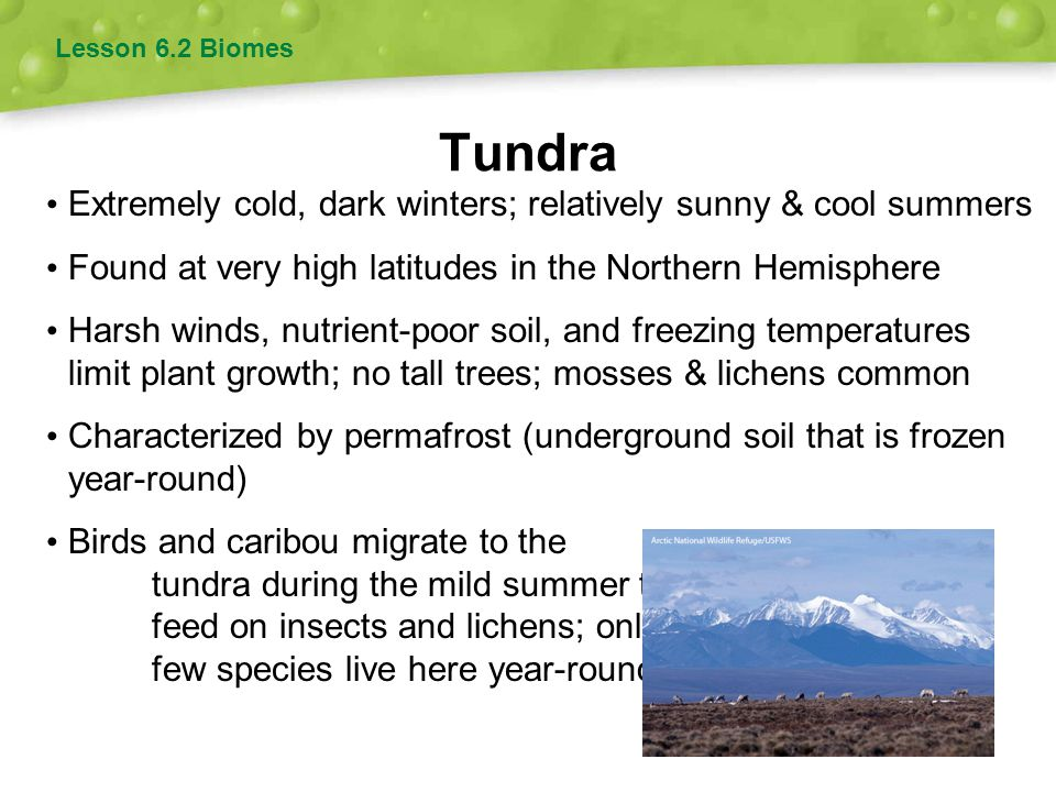 Tundra Extremely cold, dark winters; relatively sunny & cool summers
