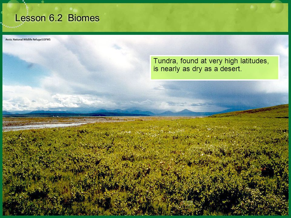 Tundra, found at very high latitudes, is nearly as dry as a desert.