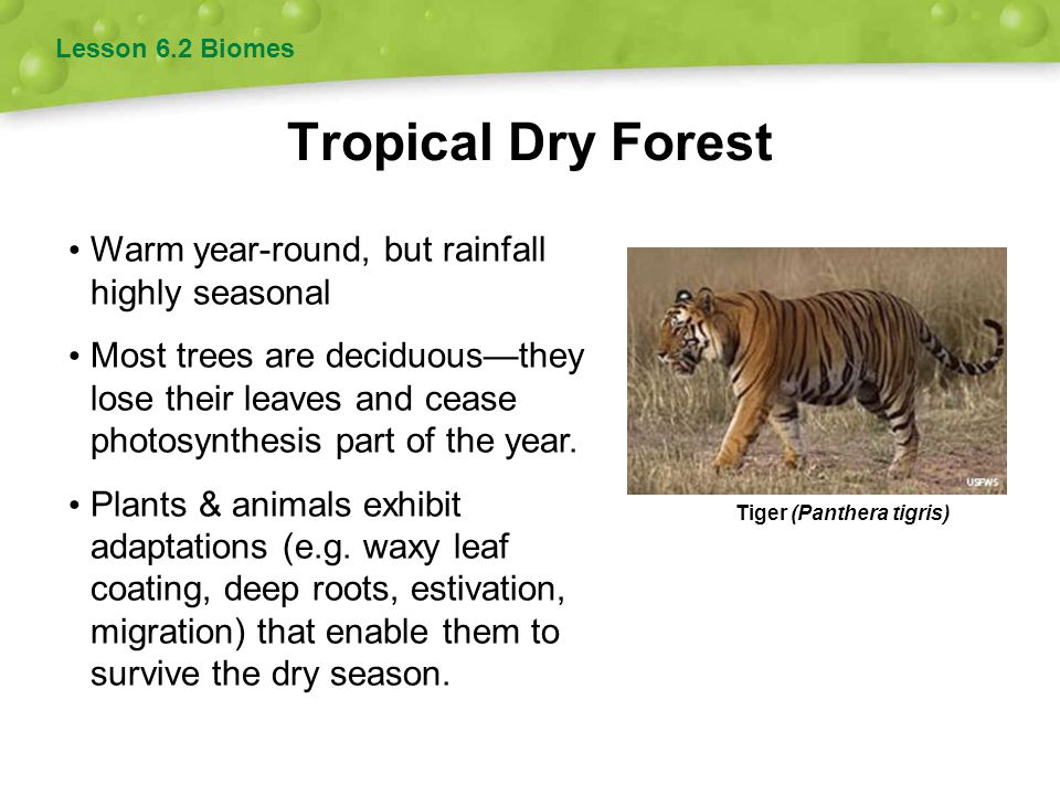 Tropical Dry Forest Warm year-round, but rainfall highly seasonal