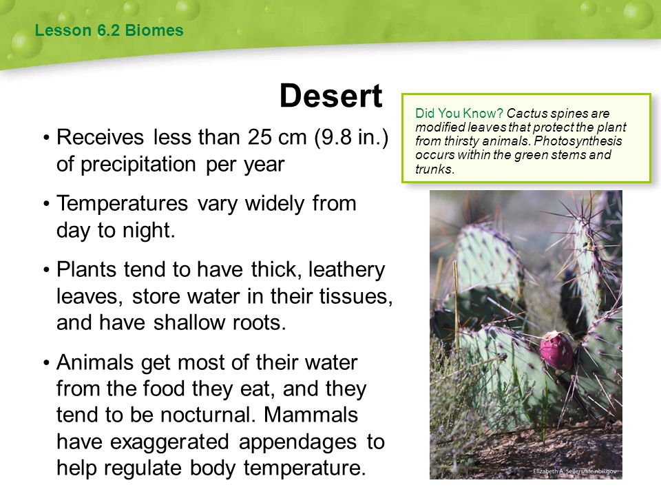 Desert Receives less than 25 cm (9.8 in.) of precipitation per year