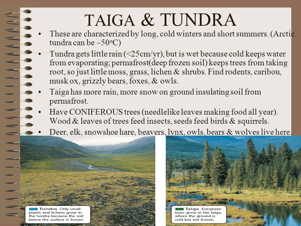 TAIGA & TUNDRA These are characterized by long, cold winters and short summers. (Arctic tundra can be –50oC)