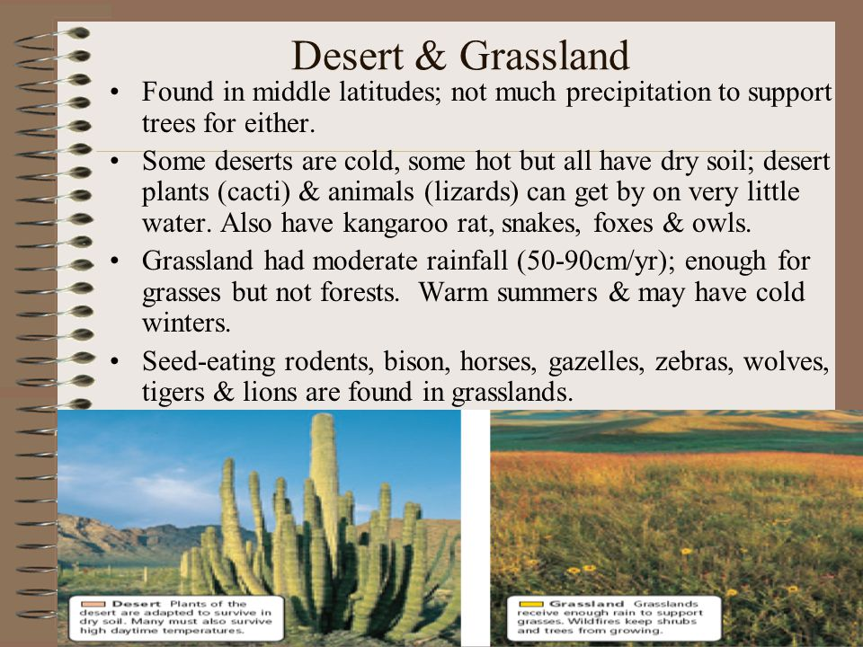 Desert & Grassland Found in middle latitudes; not much precipitation to support trees for either.