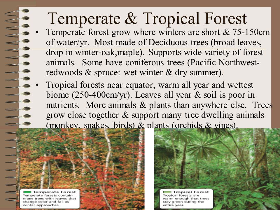 Temperate & Tropical Forest