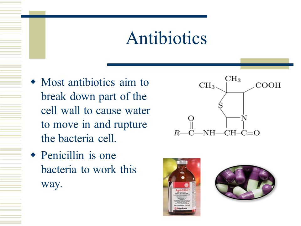 Antibiotics Most antibiotics aim to break down part of the cell wall to cause water to move in and rupture the bacteria cell.