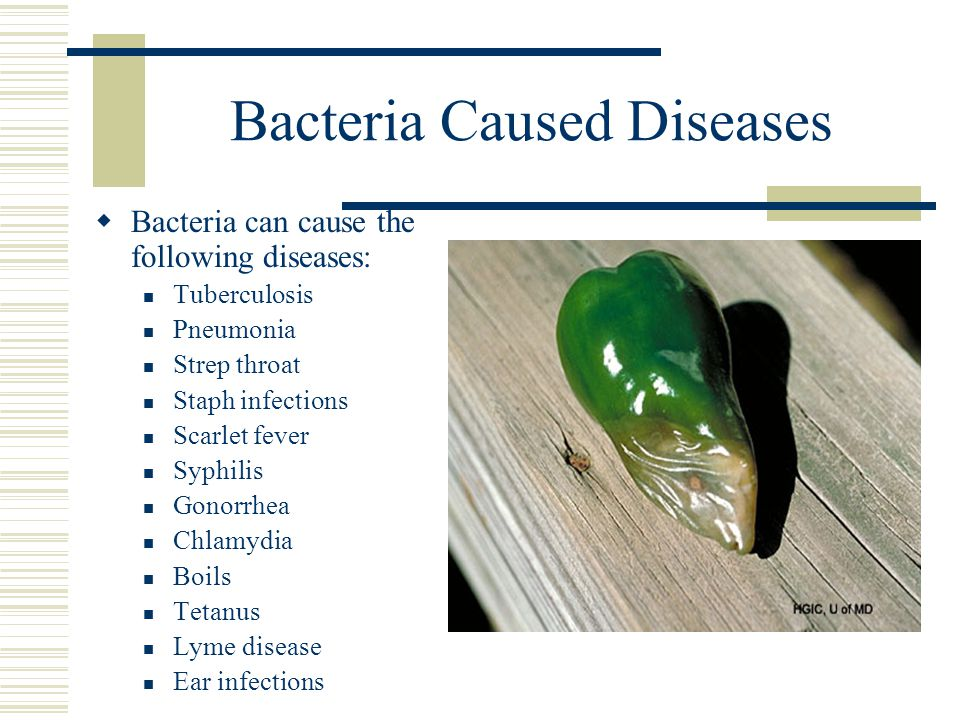 Bacteria Caused Diseases