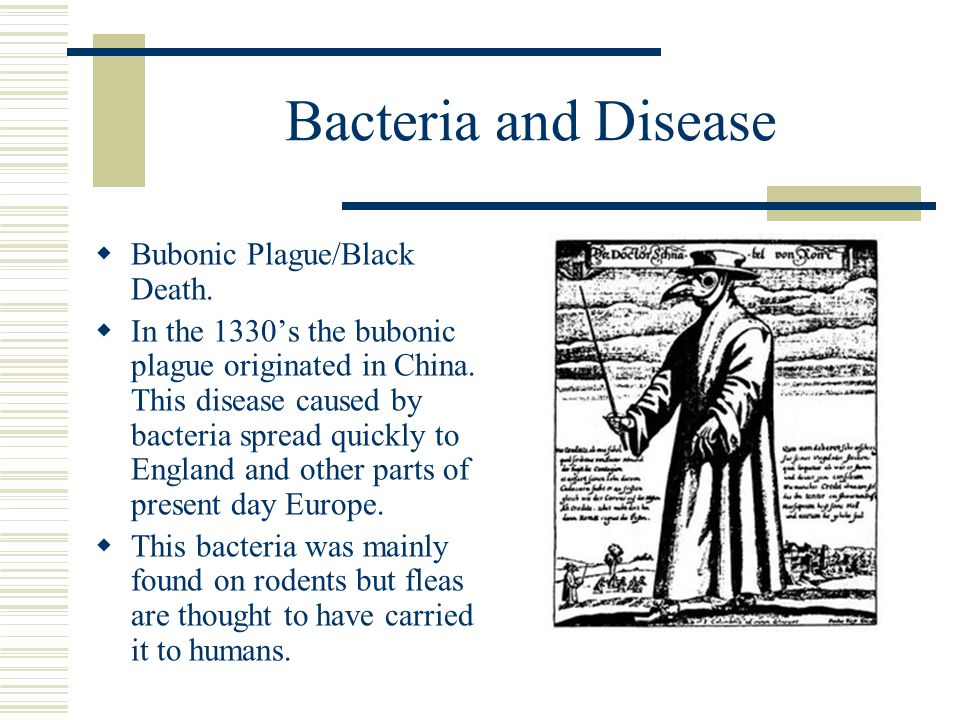 Bacteria and Disease Bubonic Plague/Black Death.