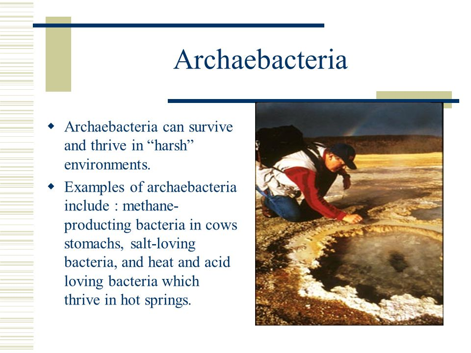 Archaebacteria Archaebacteria can survive and thrive in harsh environments.