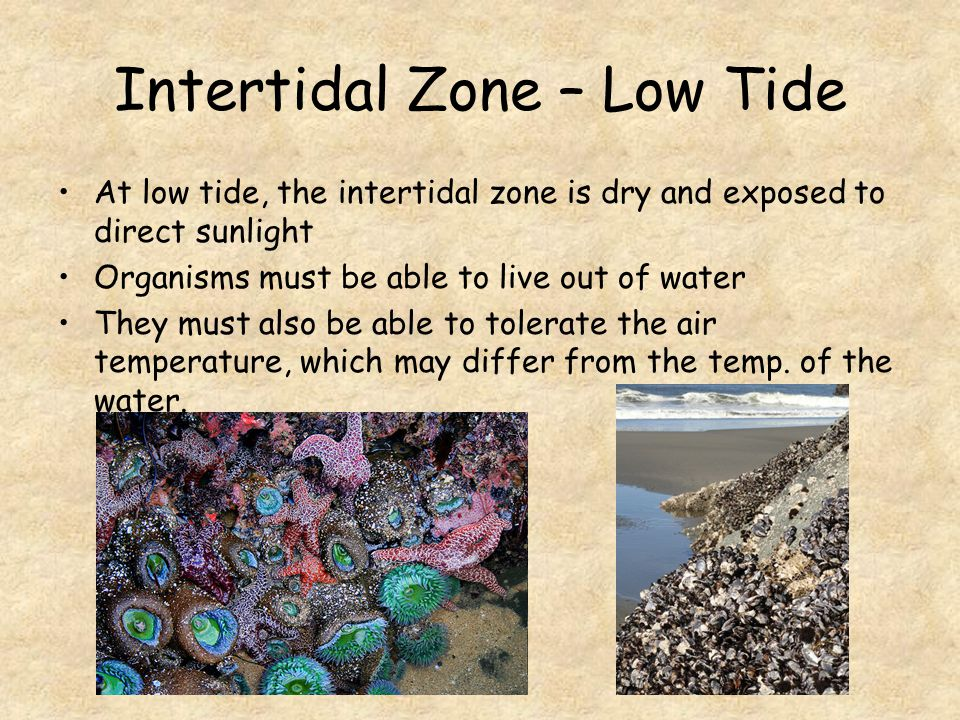 Intertidal Zone – Low Tide