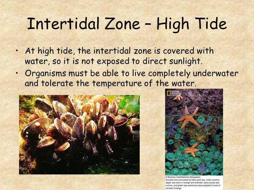 Intertidal Zone – High Tide