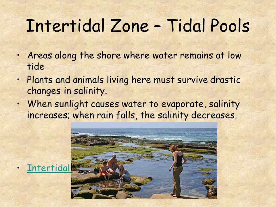 Intertidal Zone – Tidal Pools