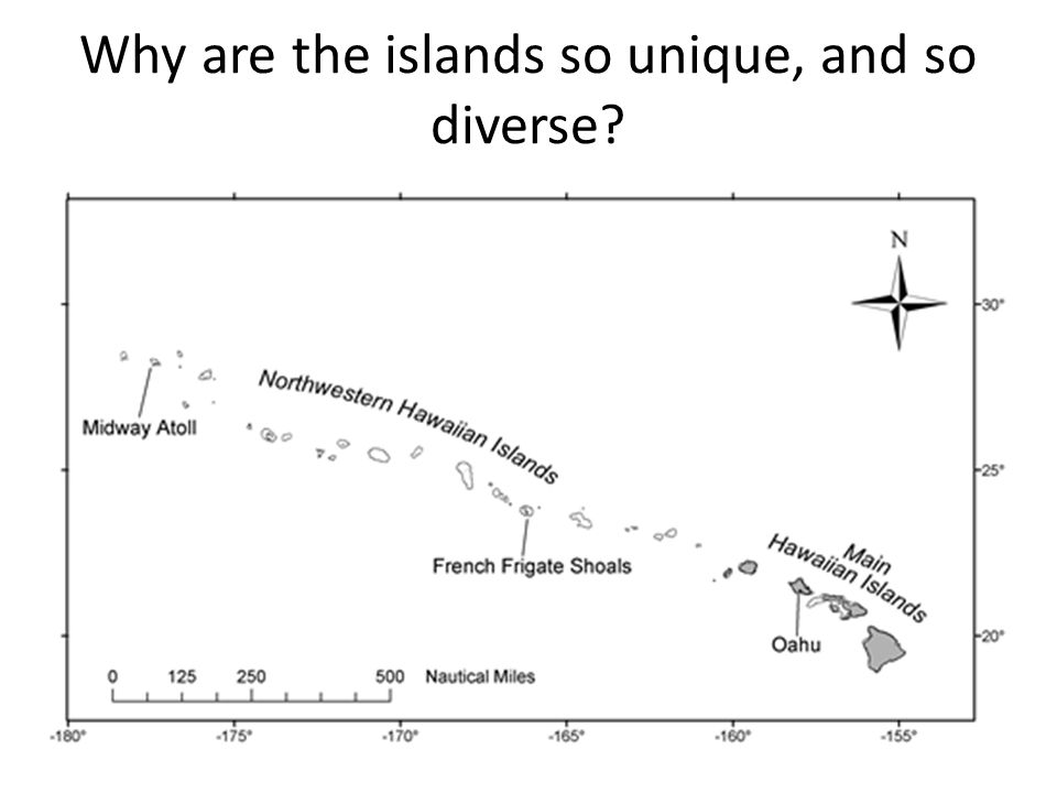 Why are the islands so unique, and so diverse