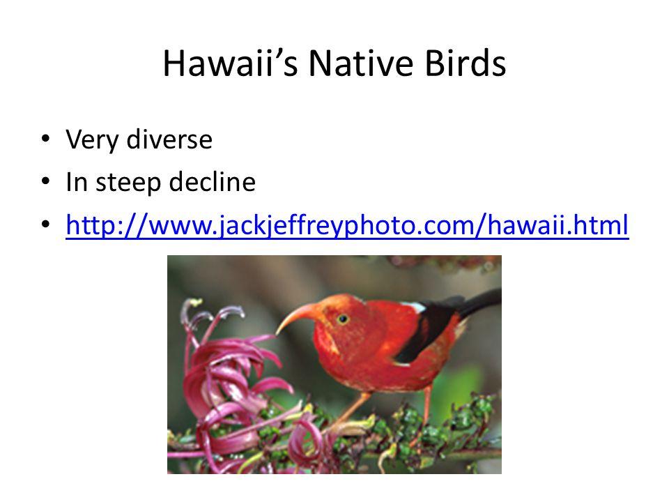 Hawaii's Native Birds Very diverse In steep decline