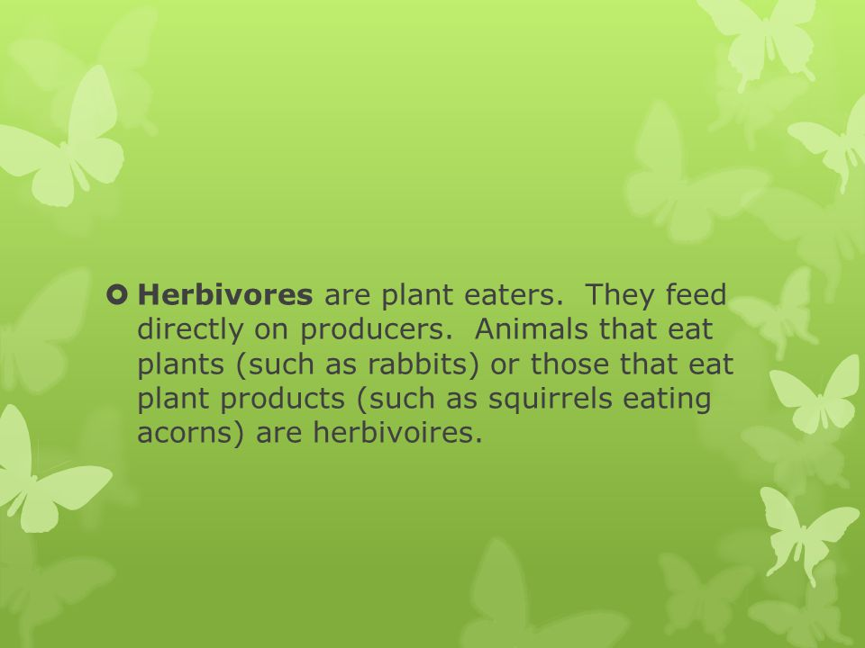 Herbivores are plant eaters. They feed directly on producers