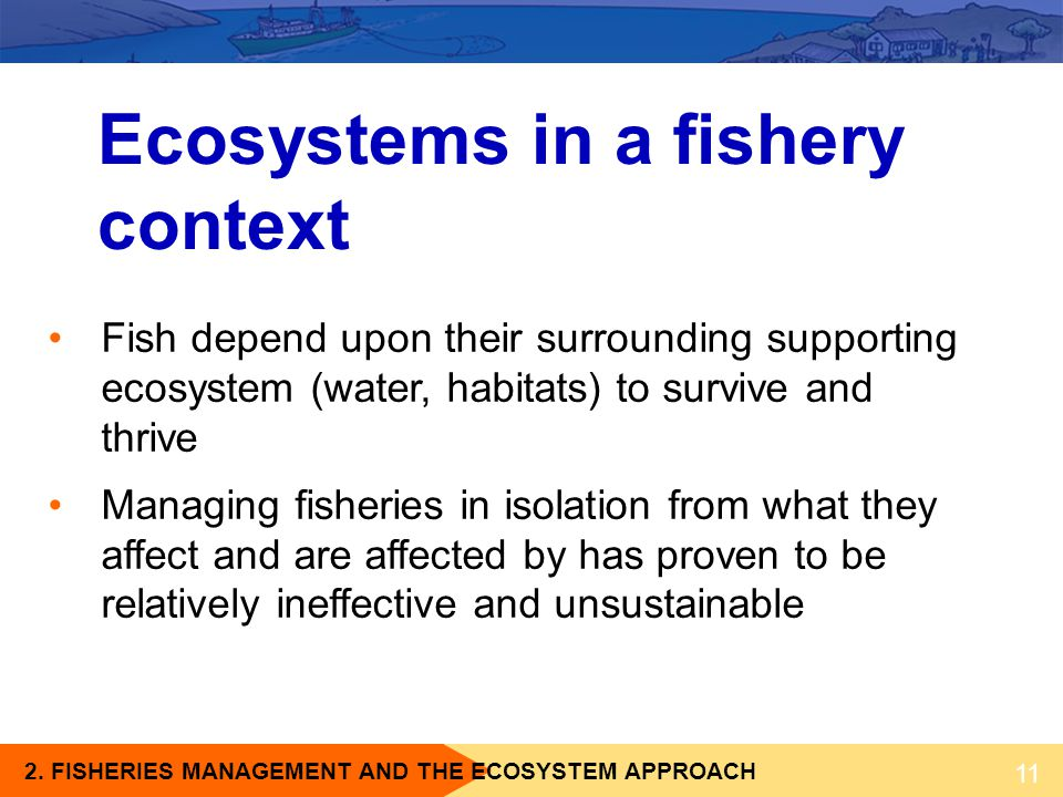 Ecosystems in a fishery context