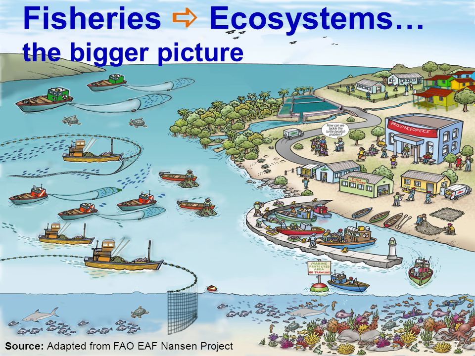 Fisheries a Ecosystems… the bigger picture
