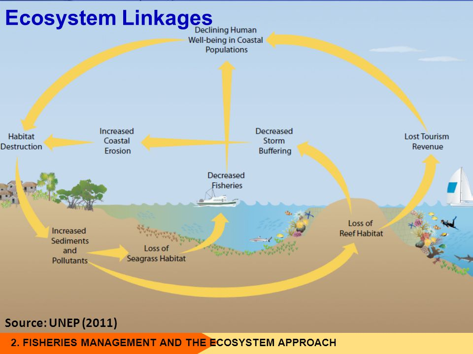 Ecosystem Linkages Source: UNEP (2011)