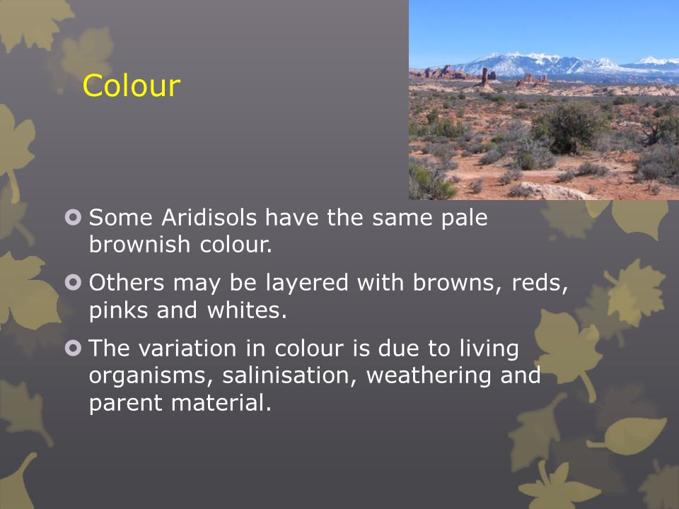 Colour Some Aridisols have the same pale brownish colour.