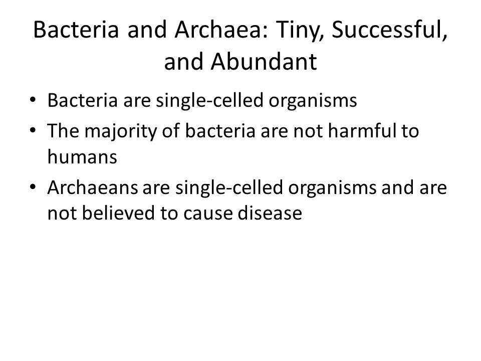 Bacteria and Archaea: Tiny, Successful, and Abundant