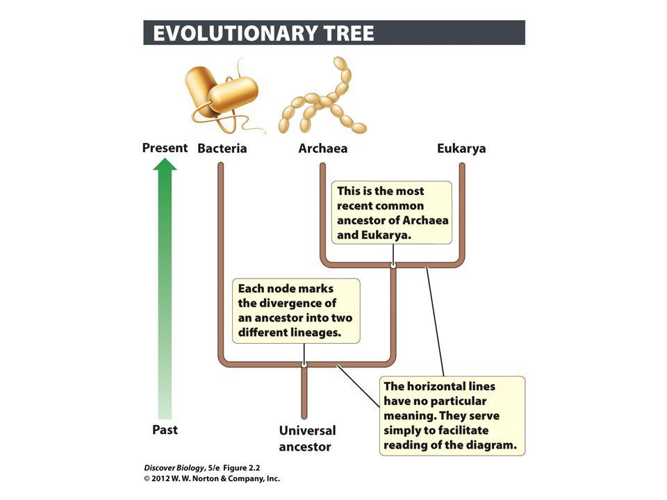 Figure 2.2 Evolutionary Tree of Domains