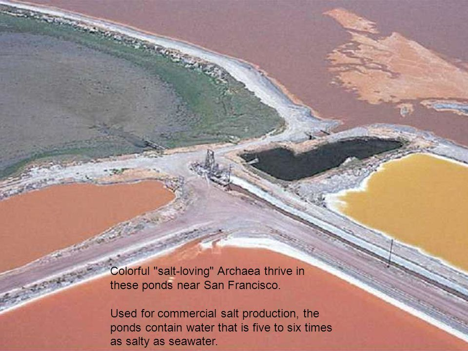 Colorful salt-loving Archaea thrive in these ponds near San Francisco.
