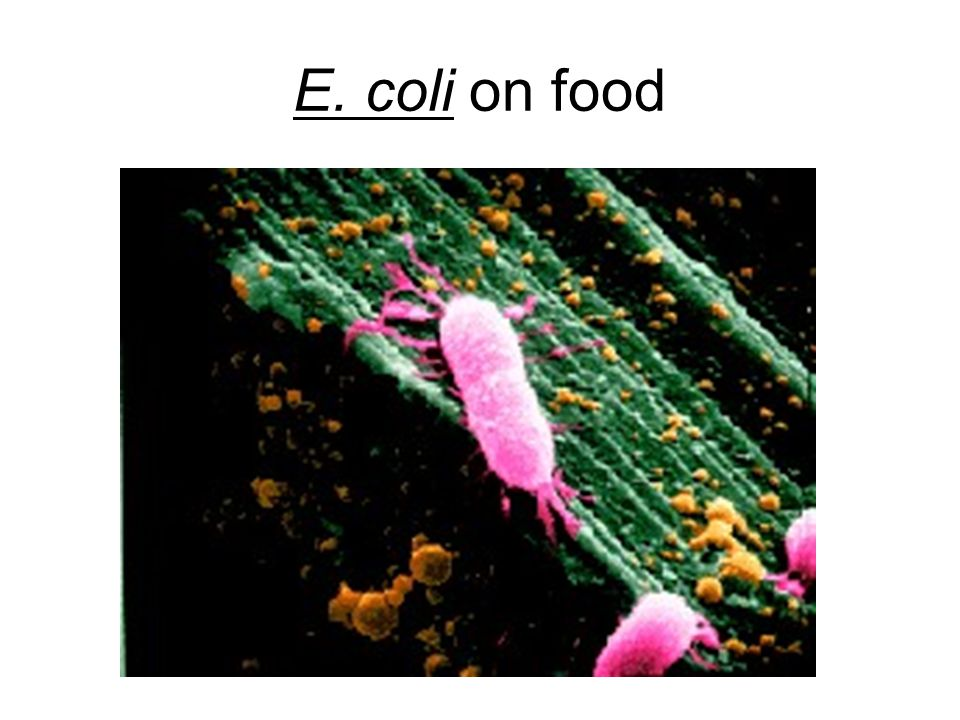 E. coli on food