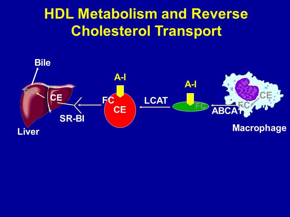 HDL Metabolism and Reverse Cholesterol Transport