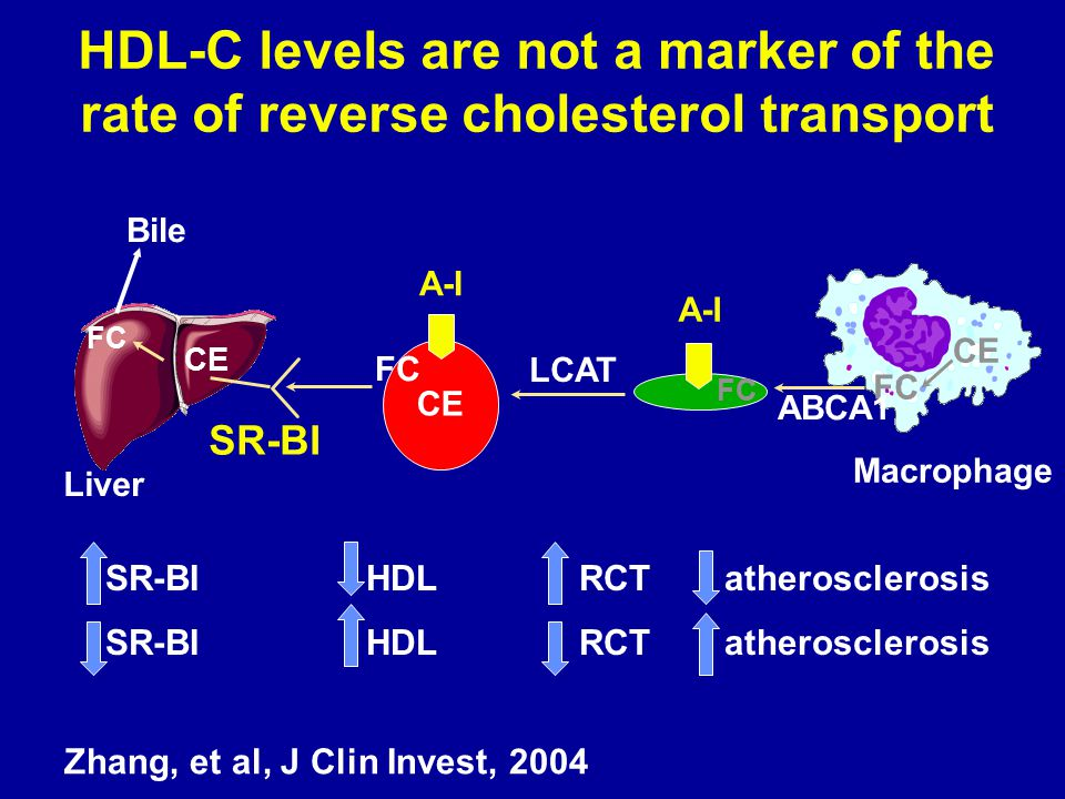 HDL-C levels are not a marker of the rate of reverse cholesterol transport