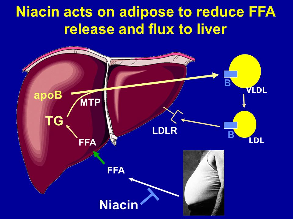 Niacin acts on adipose to reduce FFA release and flux to liver