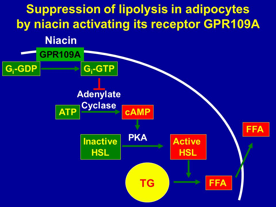 Suppression of lipolysis in adipocytes by niacin activating its receptor GPR109A