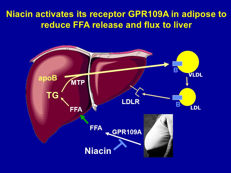 Niacin activates its receptor GPR109A in adipose to reduce FFA release and flux to liver