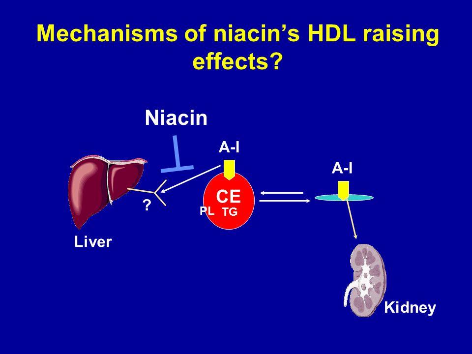 Mechanisms of niacin's HDL raising effects