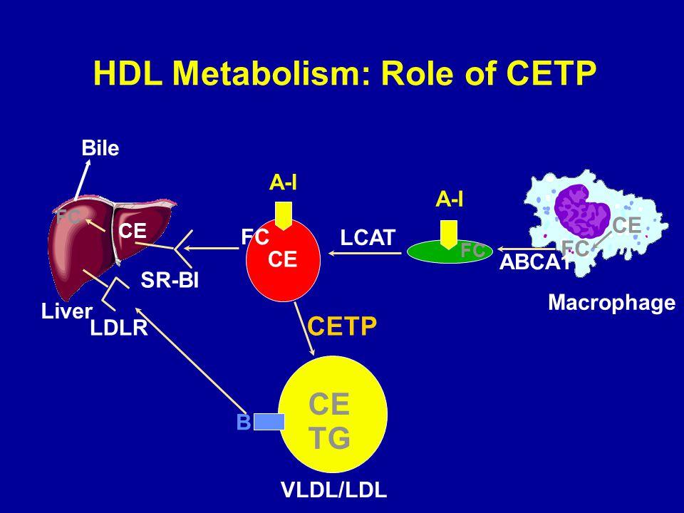 HDL Metabolism: Role of CETP