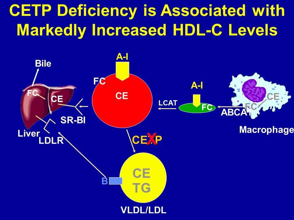 CETP Deficiency is Associated with Markedly Increased HDL-C Levels