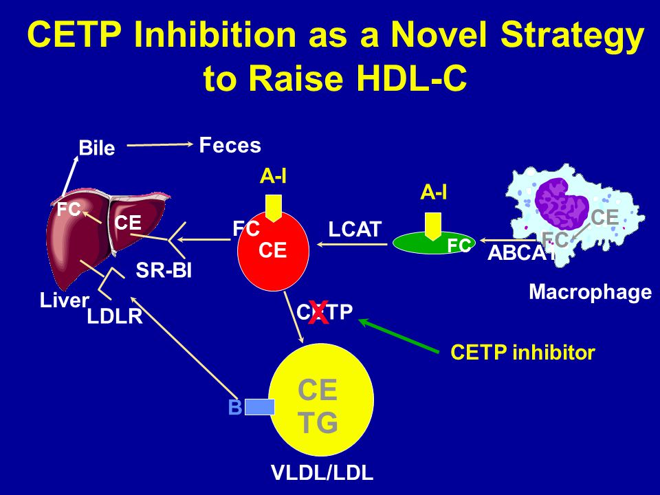 CETP Inhibition as a Novel Strategy to Raise HDL-C