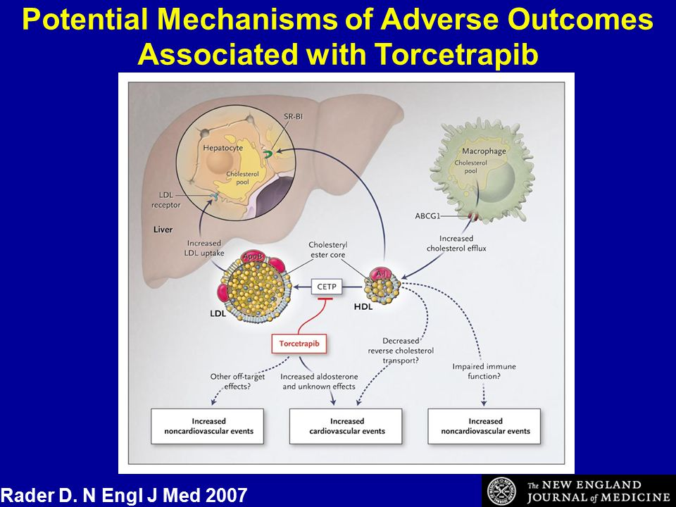 Potential Mechanisms of Adverse Outcomes Associated with Torcetrapib